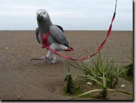 Kšandy s vodítkem pro papoušky Terra vel. XS